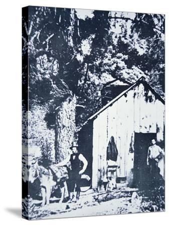 Prospectors at Clear Creek, Near Shasta, California, C.1849--Stretched Canvas Print