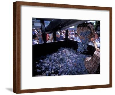 Wine Press, Wine Harvest Festival, Camara De Lobos, Madeira, Portugal--Framed Photographic Print