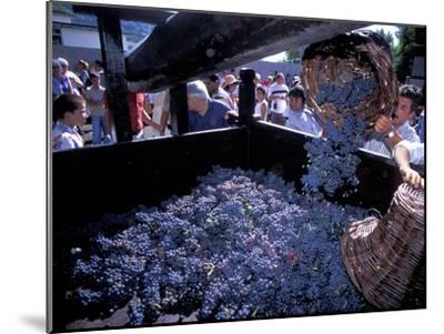 Wine Press, Wine Harvest Festival, Camara De Lobos, Madeira, Portugal--Mounted Photographic Print