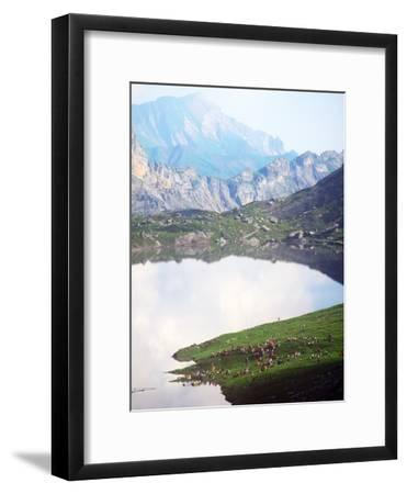 Sheepherders Festival, Gemmi, Switzerland--Framed Photographic Print