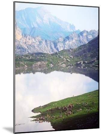 Sheepherders Festival, Gemmi, Switzerland--Mounted Photographic Print