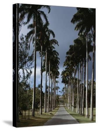 Codrington College, Barbados--Stretched Canvas Print