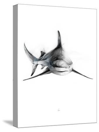 Shark 2-Alexis Marcou-Stretched Canvas Print