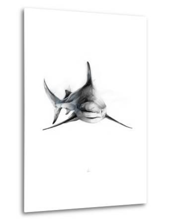 Shark 2-Alexis Marcou-Metal Print