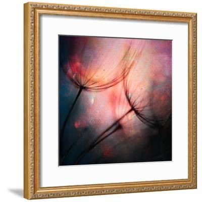 Feathery-Ursula Abresch-Framed Photographic Print