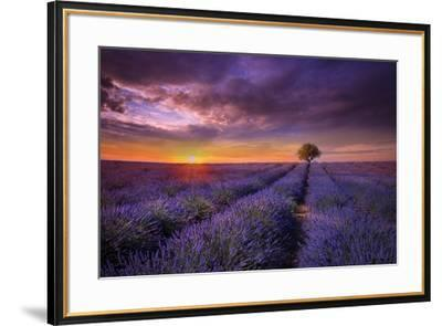 Lavender at Sunset-Marco Carmassi-Framed Photographic Print