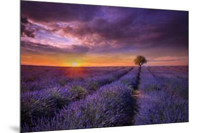 Lavender at Sunset-Marco Carmassi-Mounted Photographic Print