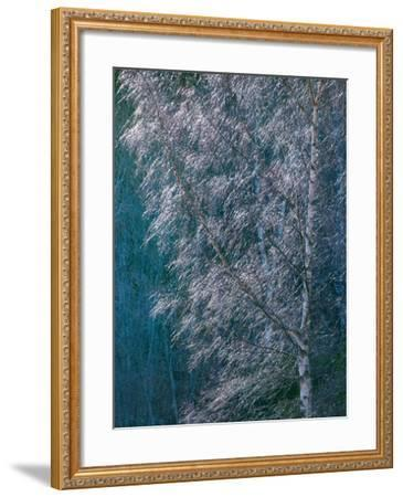 Silver Threads-Doug Chinnery-Framed Photographic Print