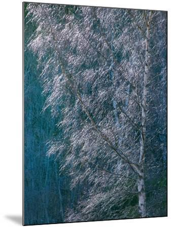 Silver Threads-Doug Chinnery-Mounted Photographic Print