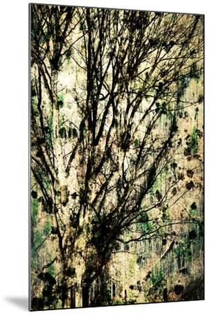 As Old as Time-Ursula Abresch-Mounted Photographic Print