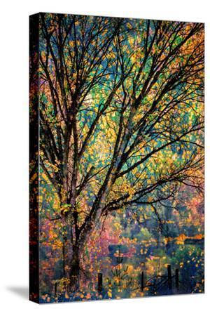 Kootenay Fall 3-Ursula Abresch-Stretched Canvas Print