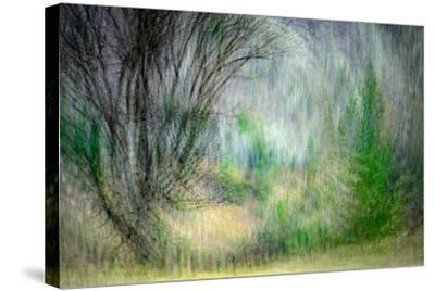 Spring Dance-Ursula Abresch-Stretched Canvas Print