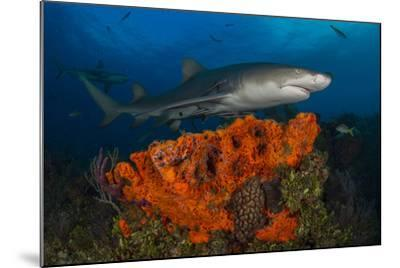 A Lemon Shark and Other Fishes Swimming over a Reef-Jim Abernethy-Mounted Photographic Print