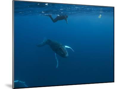A Snorkeler Swims with a Humpback Whale Calf-Cesare Naldi-Mounted Photographic Print