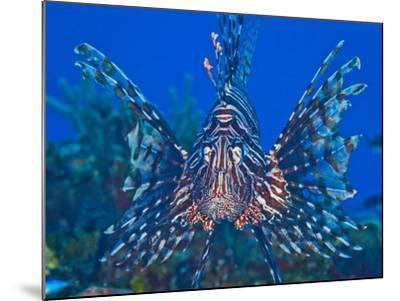 Close Up Portrait of a Lionfish-Jim Abernethy-Mounted Photographic Print