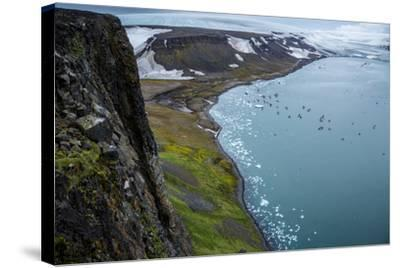 Little Auks and Glaucous Gulls from the Summit of Rubini Rock on Hooker Island-Andy Mann-Stretched Canvas Print