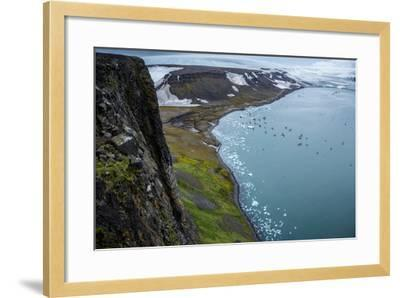 Little Auks and Glaucous Gulls from the Summit of Rubini Rock on Hooker Island-Andy Mann-Framed Photographic Print