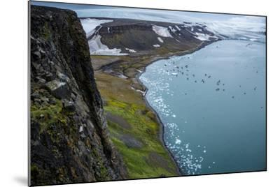 Little Auks and Glaucous Gulls from the Summit of Rubini Rock on Hooker Island-Andy Mann-Mounted Photographic Print