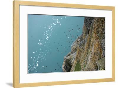 Little Auks Fly by Basalt Columns on Rubini Rock, Hooker Island-Andy Mann-Framed Photographic Print