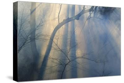 Smoke from Prairie Burn Through Woodland Hollow-Michael Forsberg-Stretched Canvas Print