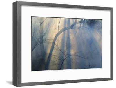 Smoke from Prairie Burn Through Woodland Hollow-Michael Forsberg-Framed Photographic Print