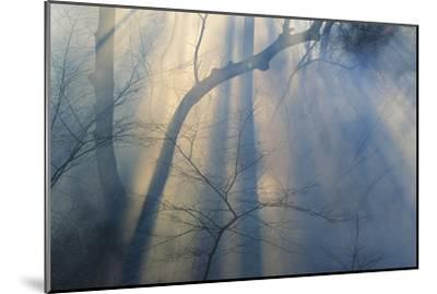 Smoke from Prairie Burn Through Woodland Hollow-Michael Forsberg-Mounted Photographic Print