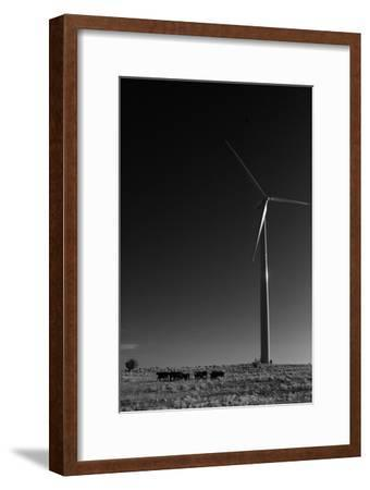 A Herd of Cattle Walk in a Pasture Below a Modern Wind Turbine-Michael Forsberg-Framed Photographic Print