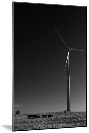 A Herd of Cattle Walk in a Pasture Below a Modern Wind Turbine-Michael Forsberg-Mounted Photographic Print