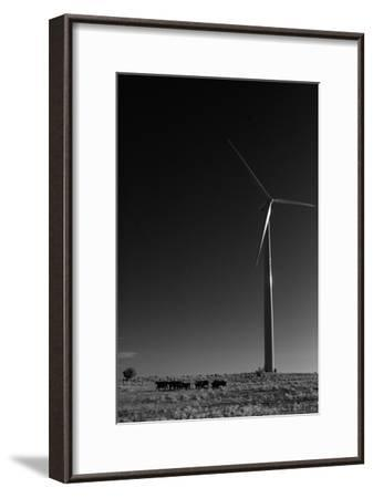 A Herd of Cattle Walk in a Pasture Below a Modern Wind Turbine-Michael Forsberg-Framed Photographic Print