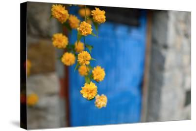 Marigolds Hang in Front of the Blue Door of a Stone Building-Keith Ladzinski-Stretched Canvas Print