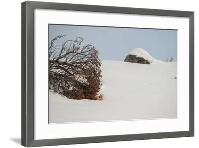 A Red Fox Rests under a Tree in a Snowy Landscape-Tom Murphy-Framed Photographic Print