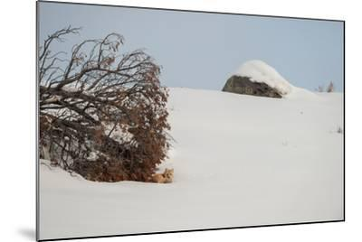 A Red Fox Rests under a Tree in a Snowy Landscape-Tom Murphy-Mounted Photographic Print