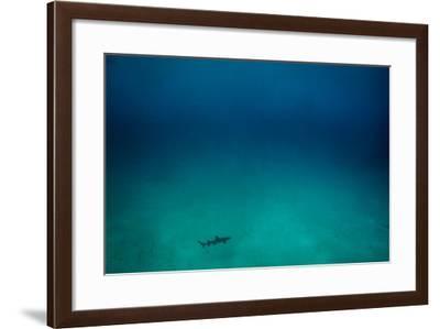 Cocos Island, Costa Rica: A White Tip Reef Shark Cruises the Sandy Bottom-Ben Horton-Framed Photographic Print