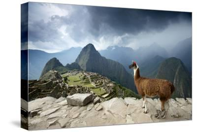 A Llama Overlooks the Pre-Columbian Inca Ruins of Machu Picchu-Jim Richardson-Stretched Canvas Print
