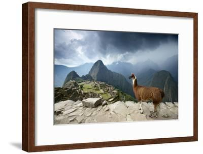 A Llama Overlooks the Pre-Columbian Inca Ruins of Machu Picchu-Jim Richardson-Framed Premium Photographic Print