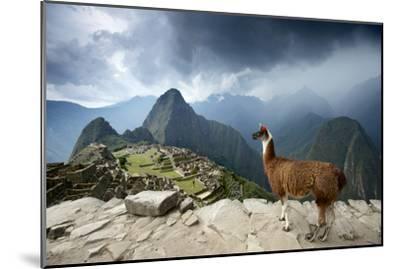 A Llama Overlooks the Pre-Columbian Inca Ruins of Machu Picchu-Jim Richardson-Mounted Premium Photographic Print