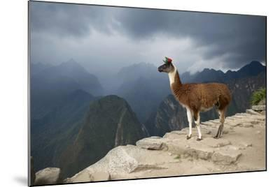 A Llama Stands on a Terrace High in the Andes-Jim Richardson-Mounted Photographic Print