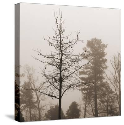 Evening Mist 1 Detail-Marlana Semenza-Stretched Canvas Print