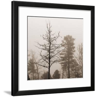 Evening Mist 1 Detail-Marlana Semenza-Framed Art Print