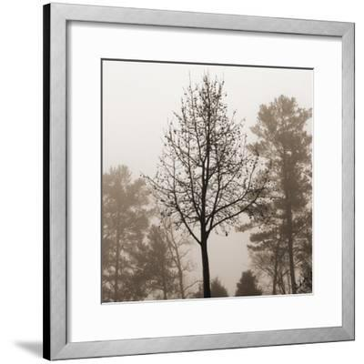 Evening Mist 2 Detail-Marlana Semenza-Framed Art Print