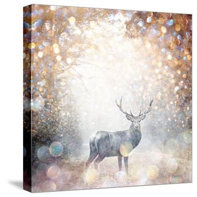 Mystical Forest 1-Beau Jakobs-Stretched Canvas Print