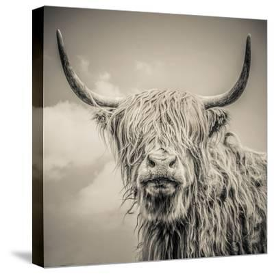 Highland Cattle-Mark Gemmell-Stretched Canvas Print