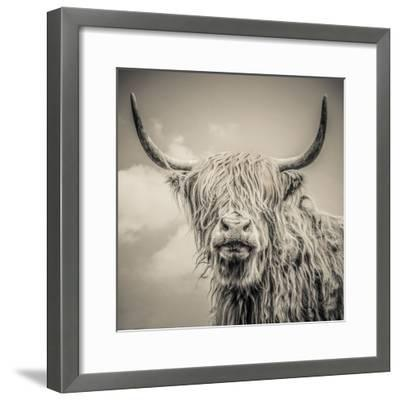 Highland Cattle-Mark Gemmell-Framed Premium Photographic Print
