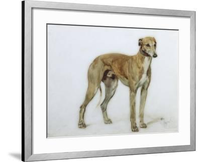 A Fawn Greyhound, 1897-Cecil Charles Windsor Aldin-Framed Giclee Print