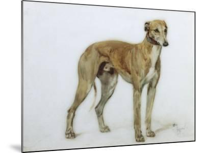 A Fawn Greyhound, 1897-Cecil Charles Windsor Aldin-Mounted Giclee Print