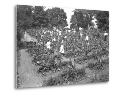 Children Working in the Isham Park School Garden, New York City, August 16, 1915-William Davis Hassler-Metal Print