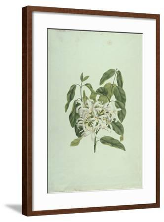 Taberne Montana (Leaves and Flowers)-James Bruce-Framed Giclee Print