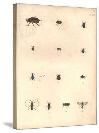 Beetles and Wasps-Baron Friedrich von Humboldt-Stretched Canvas Print