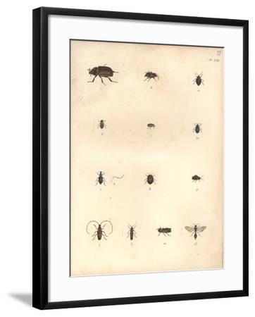 Beetles and Wasps-Baron Friedrich von Humboldt-Framed Giclee Print