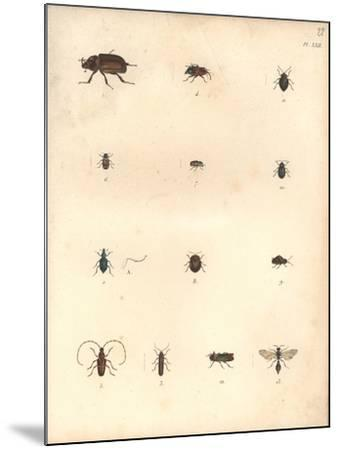 Beetles and Wasps-Baron Friedrich von Humboldt-Mounted Giclee Print